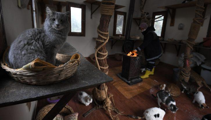 Osmangazi'de Sobalar Sahipsiz Kediler İçin Yandı